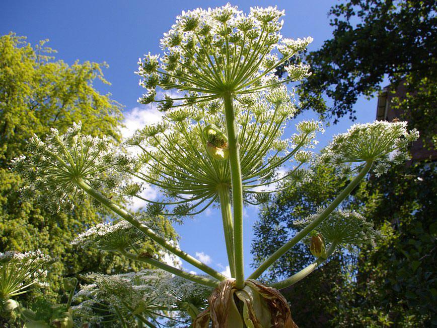 Bu Bitkilerden Uzak Durun: Günümüzdeki En Tehlikeli 5 Bitki