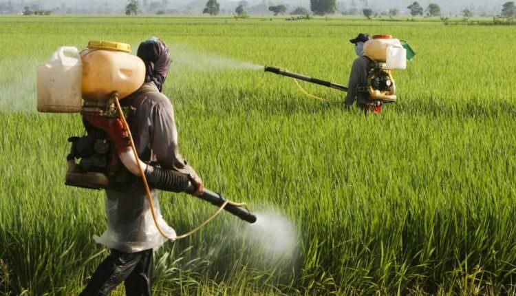 Pestisitler, parazit bir solucana yakalanma riskini artırabilir
