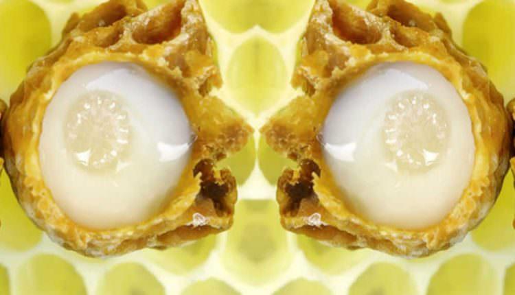 Arı Sütü : Bulunan Gizli Molekül Yaraların Hızlı İyileşmesini Sağlıyor
