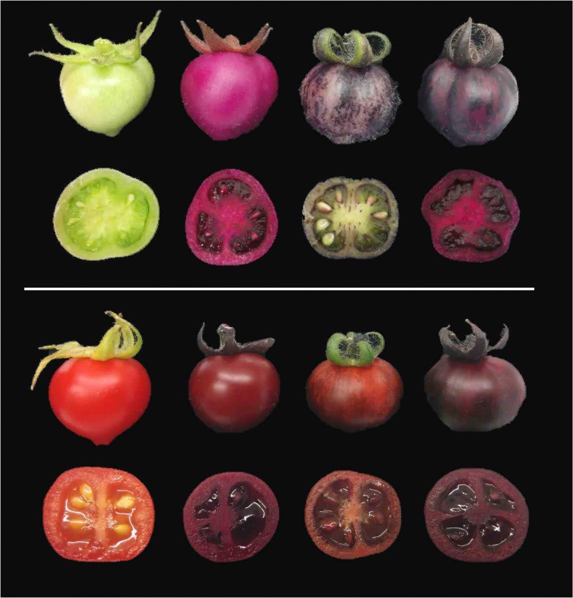 Pancardan elde edilen pigmentler hastalıklara direnci ve bitki besin değerini artırabilir