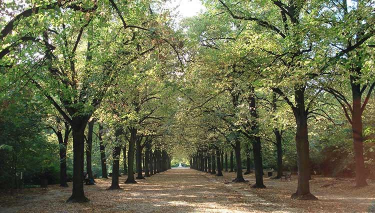 Megakentlerdeki Ağaçların Yıllık Değeri 500 Milyon Dolar!