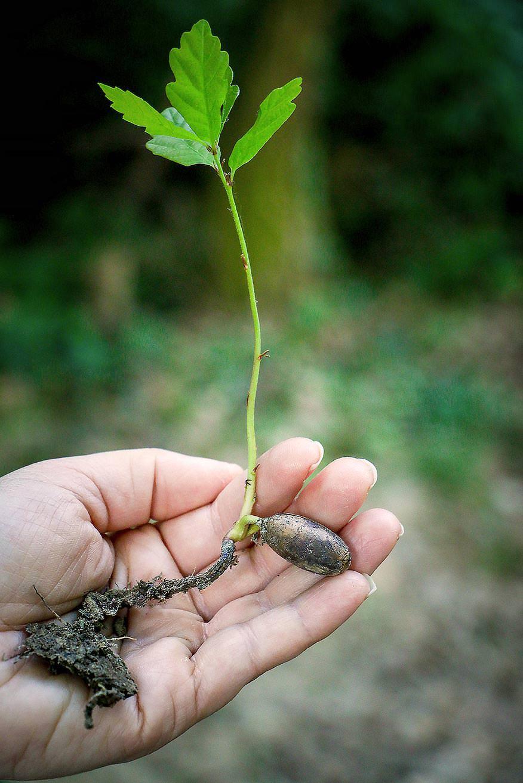Orman Restorasyonlarının İklim Değişikliği Odaklı Olmaya İhtiyacı Var