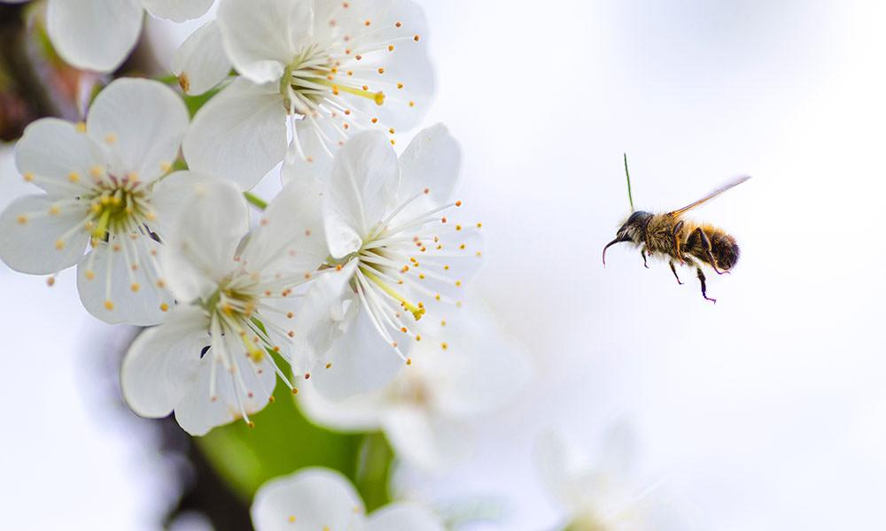 Bal Arılarının Doğal Yaşam Alanları Hakkında Yeni Rapor