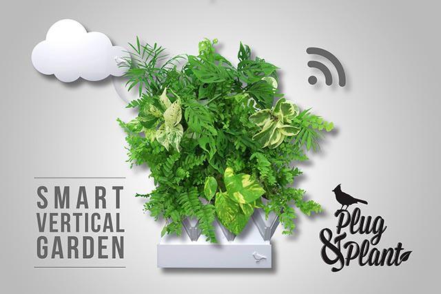 Artık Salonunuzun Duvarında Bitki Yetiştirebilmeniz Mümkün