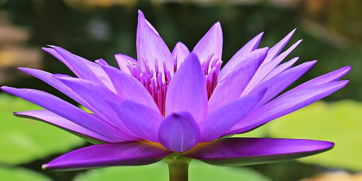 Çiçekli Bitkiler Ne Zaman Ortaya Çıktı?