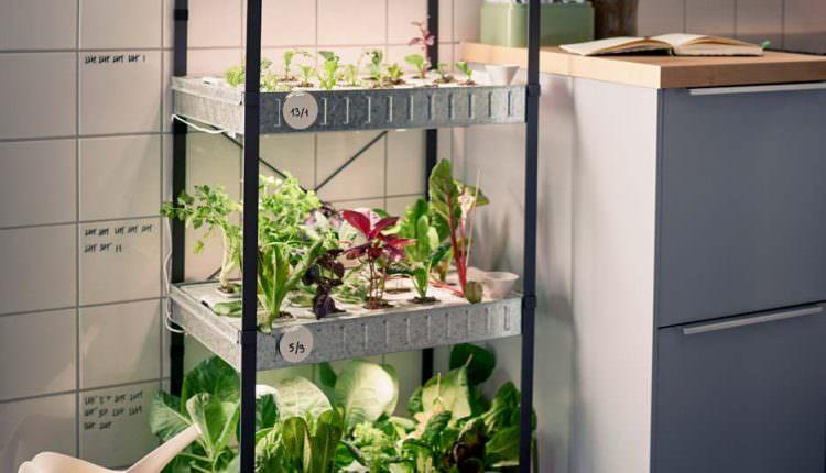 Topraksız Tarım İle Kentlerde Yaşayanlarda Çiftçilik Yapabilir