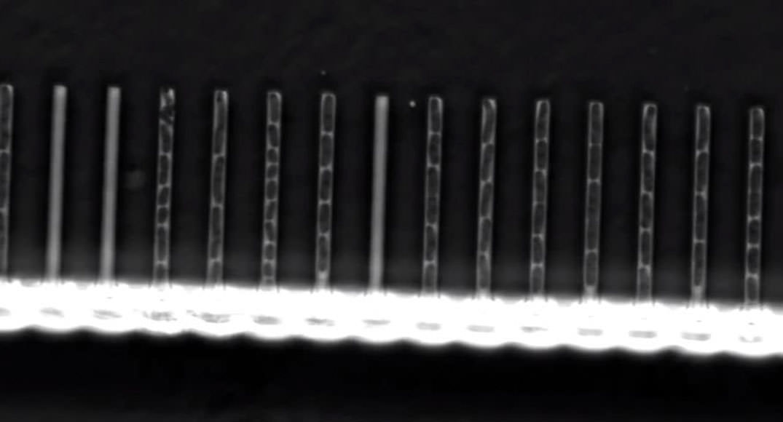 Tek Hücreli Canlılarda Mutasyonların Etkilerini Ölçen Yeni Cihaz Geliştirildi
