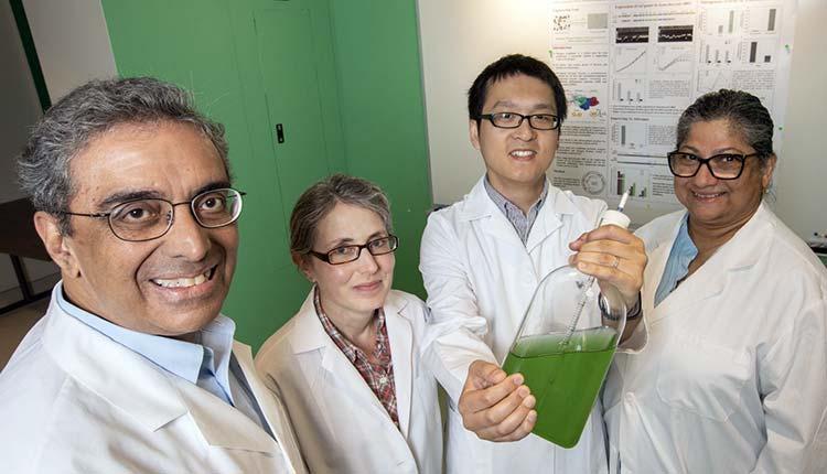 Gelecekte Bitkiler İhtiyaçları Olan Azotu Havadan Karşılayacaklar