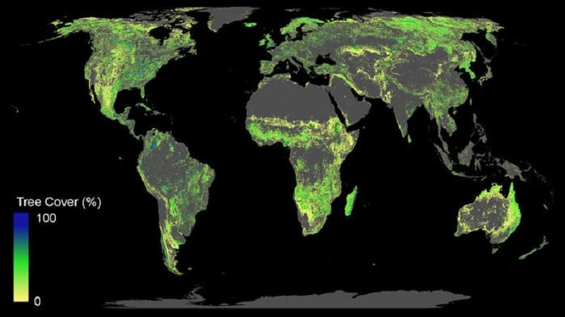 1 milyar hektarlık orman, iklim krizinin kontrol edilmesine yardımcı olabilir