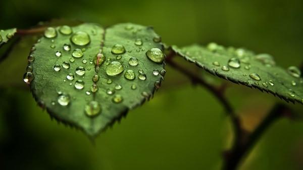 Bitkiler Stres Altında Ultrasonik Sesler Yayıyor