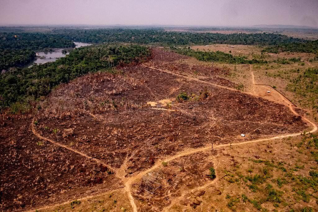 Amazon ocak ayı içerisinde ormansızlaşma rekoru kırdı
