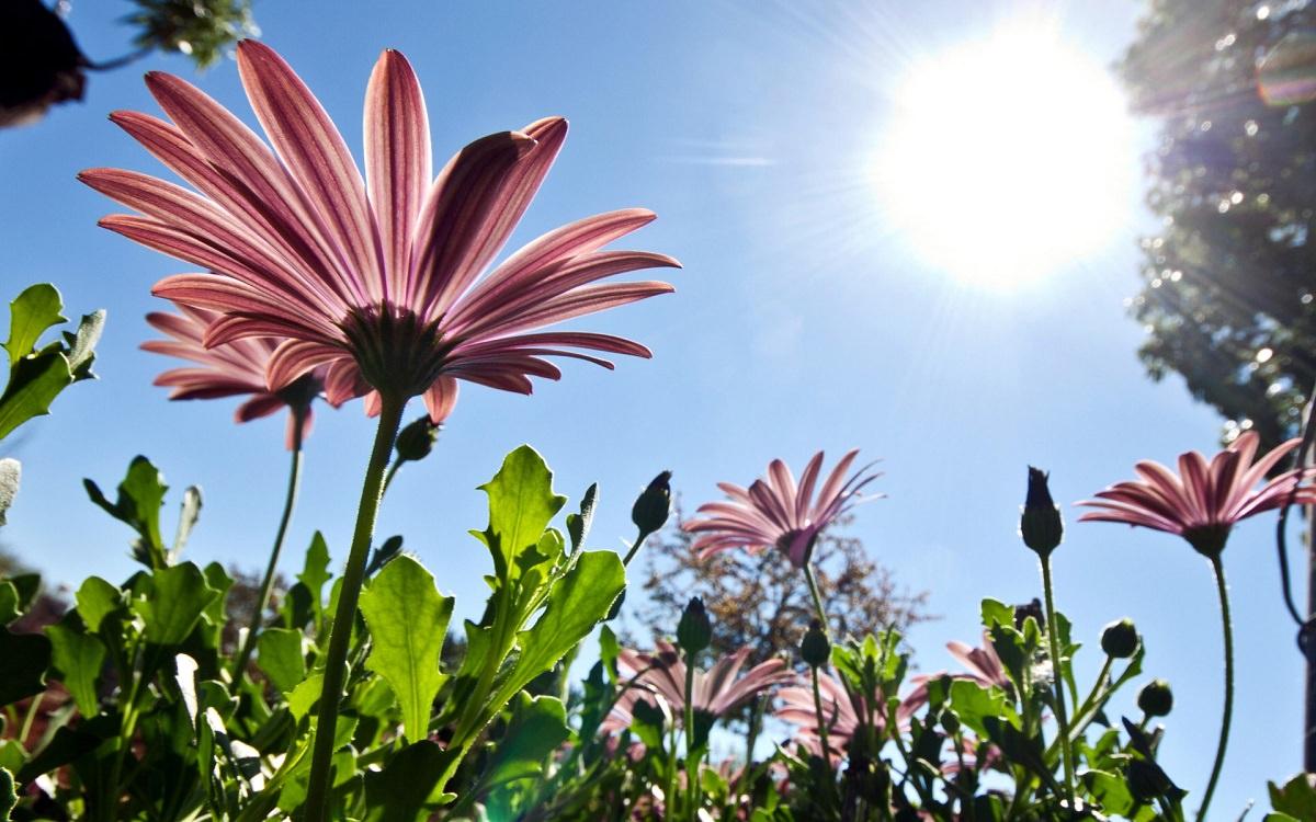 Bitkiler kendilerini fazla güneş ışınlarından nasıl korur?
